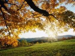 Autumn_Leaves_1.jpg