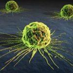 Mecanismos moleculares del cáncer