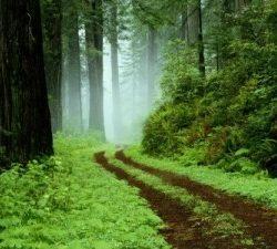Ética y naturaleza