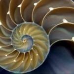 Sinergia y fractales