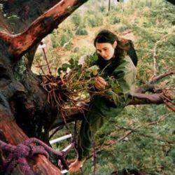 Julia Hill, la joven que vivió en un árbol por defender la naturaleza