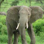 El origen de los elefantes