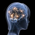 El cerebro holográfico