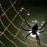 La araña Mizguir