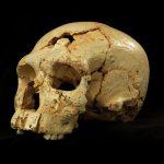 Aportaciones de la Península Ibérica a la paleoantropología europea