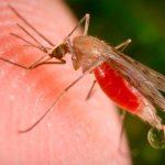Artemisa: la planta que vence a la malaria