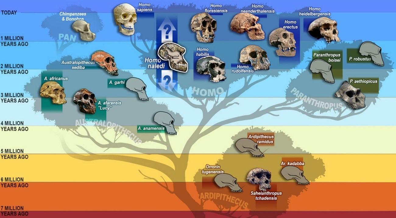 mapa evolucion darwinismo 2