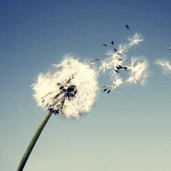 Los nudos del viento