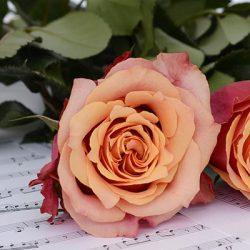 La Memoria Musical