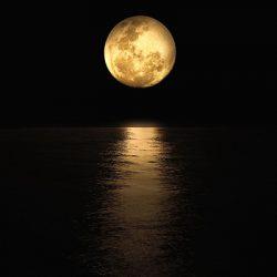 luna cañari