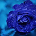 De la rosa azul a los versos místicos: Juan Ramón y Amado Nervo