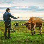 Animales y humanos, una permanente interacción