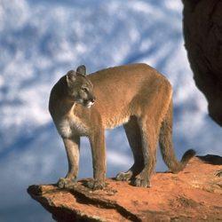 Animales simbólicos entre los indios Pueblo
