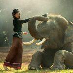 La dignidad de los animales