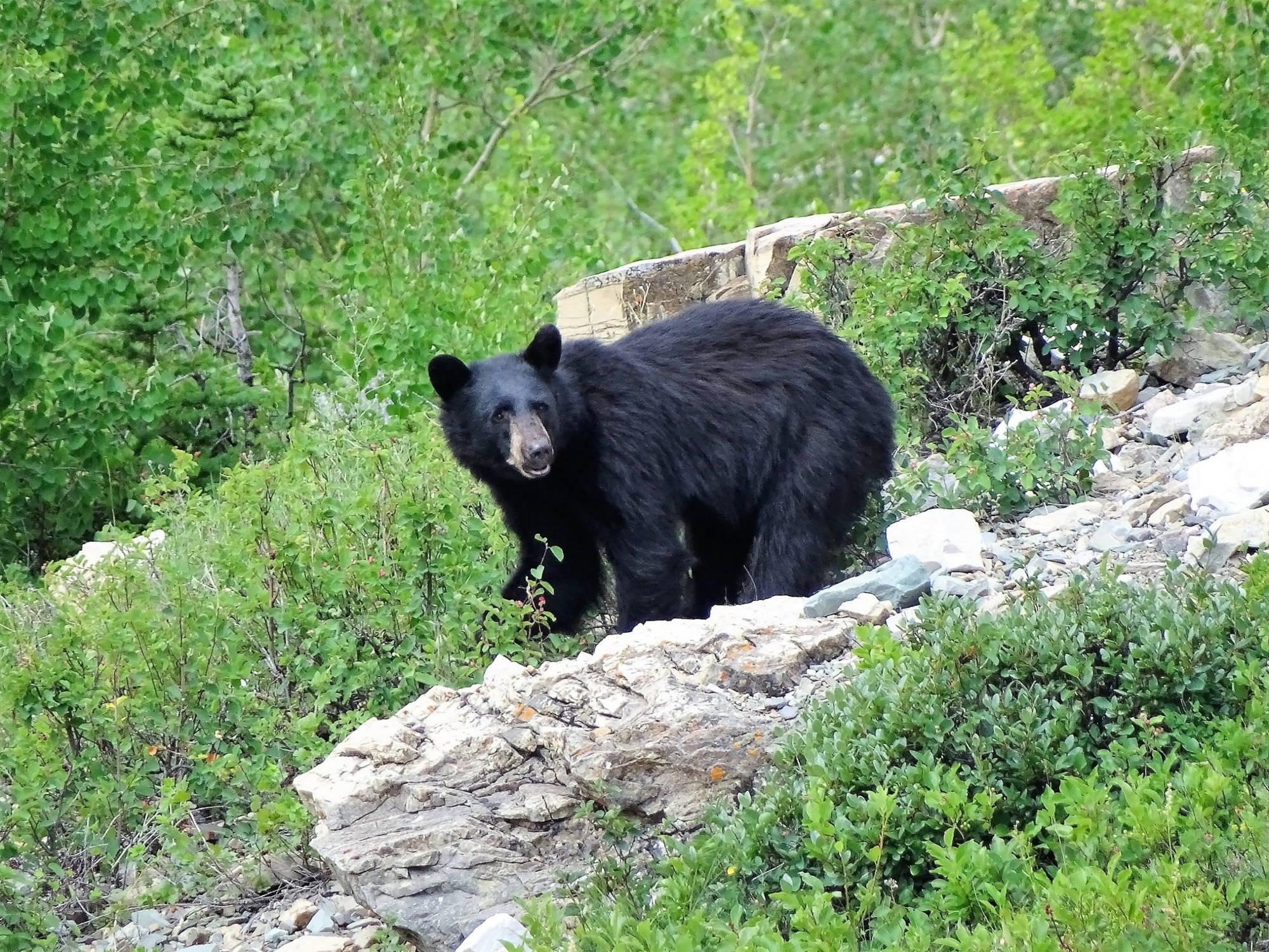 Fauna del parque oso negro